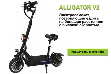 alligator_dlya_stati.jpg